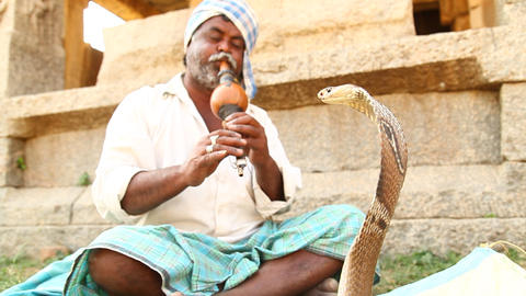 Man with snake cobra Footage