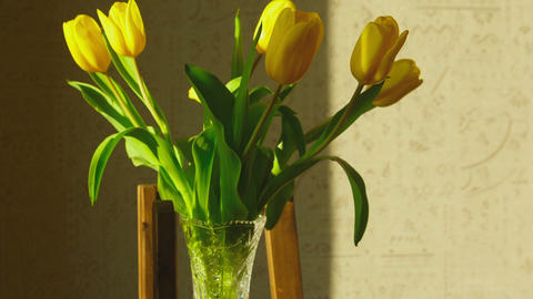 Withering yellow tulips Footage