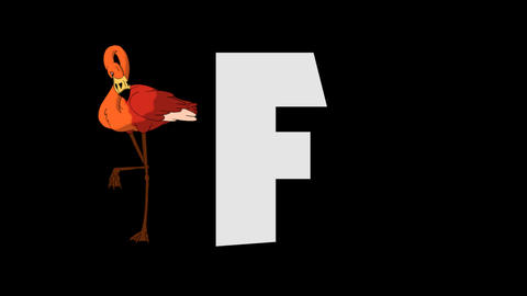 Letter F and Flamingo (background) Animation