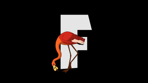 Letter F and Flamingo (foreground) Animation