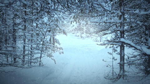 Snowfall in the Spruce Forest. Seamless Loop Footage