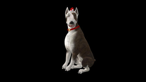 Winter Holiday Dog - Bull Terrier Animation
