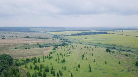 Landing at the edge of the forest. Panorama of a grove and fields. Russia, From Footage