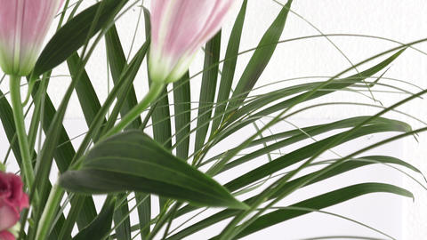Bouquet of Flowers – Lilies. Bouquet of pink lily flowers isolated on white Footage