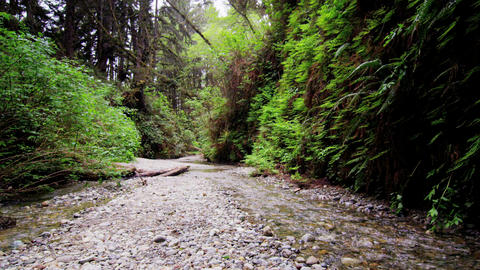 Tracking shot across stream in fern canyon Footage