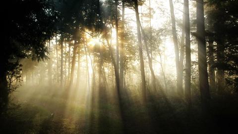 Foggy Morning Forest CG動画素材