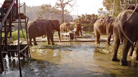 Elephants for tourists riding in evening near Prenn Waterfall. Dalat. Vietnam Footage