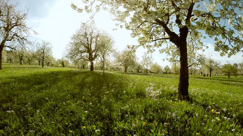 Flying trough spring trees silhouette springtime sun flare light nature Footage