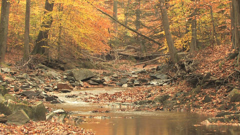Winding creek through autumn woods zoom out Footage