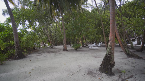 Walking amongst Coconut Palms at a Resort in the Maldives Footage