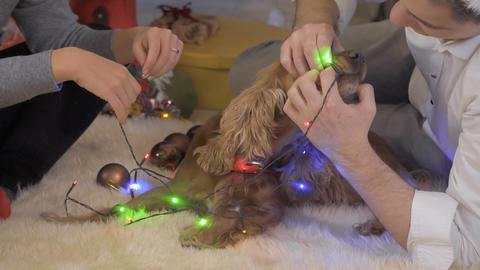 Funny dog eats an electric christmas garland Live Action