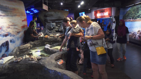 Interactive exhibit in the KLCC public aquarium. 4k footage Footage