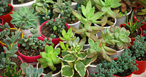 Small Potted Plants and Succulents in a Garden Shop Footage