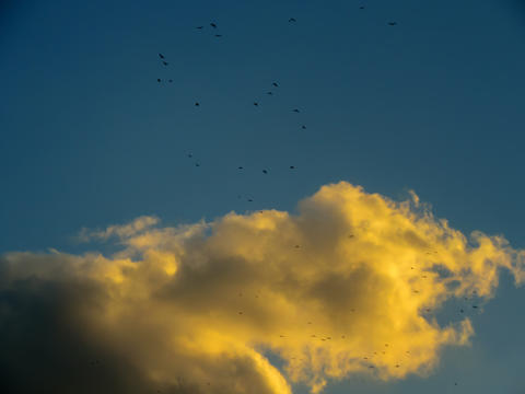 Gold cloud with birds Photo