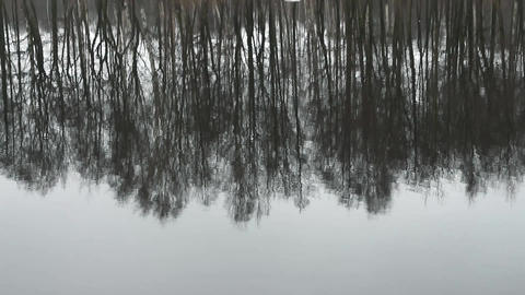 trees inverted reflection Footage
