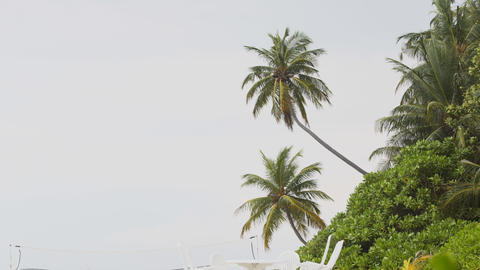 Coconut Palms over a Luxury Resort's Private Beach Footage