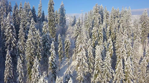 Flight over snowy mountain coniferous forest. Clear sunny frosty weather Footage