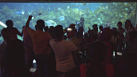SCUBA divers entertaining guests at Aquaria KLCC Footage