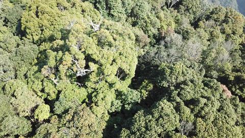 DJI MAVIC 4K Taiwan Nantou Aerial Drone Video Xiaochu Mountain 20171231 0 Footage