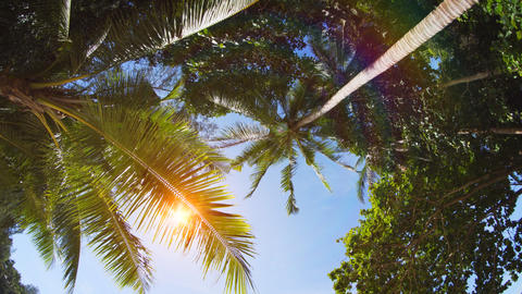 Sunshine Peeking between Palm Fronds in Thailand. UltraHD 4k video Footage