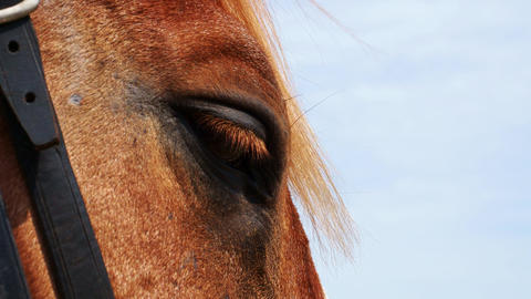 The horse's eyes Footage