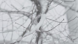 Snow-covered tree branches in winter (close-up) Footage