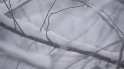 Close-up of a tree branch in the snow Stock Video Footage