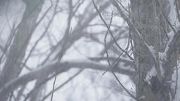 Snow on tree branches in winter Footage