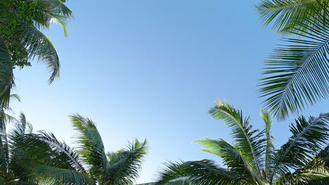 Tropical Palm Leaves Swaying against a Clear Blue Sky GIF