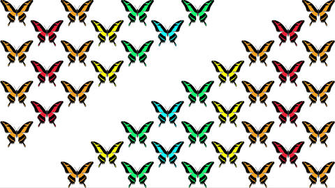 animation of multicolored butterflies on white background Animation