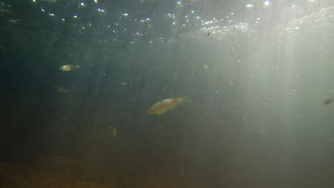 Underwater Perspective of Tiny Fish in a Mountain Stream. with Sound Footage