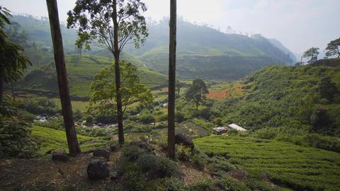 Sri Lankan Hillside Tea Plantation from Elevated Perspective Footage