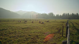 Nature Agricultural Panorama with Goats Grazing on Grass in Field at Sunset Archivo