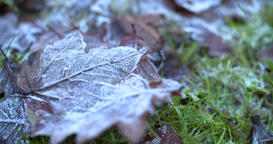 shot across frozen leaves on the ground Filmmaterial