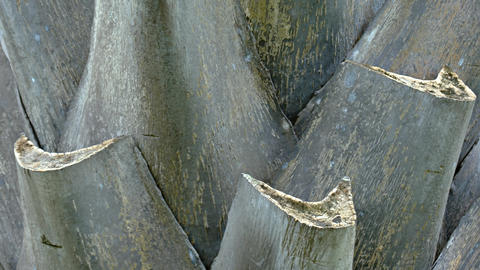 Closeup of a Palm Tree's Trunk Footage