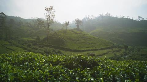 Morning Mist over a Hillside Tea Plantation in Sri Lanka Footage