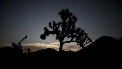 Shooting stars joshua tree silhouette Live Action