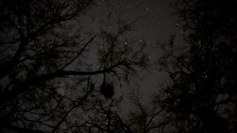 Stars through tree tops Live Action