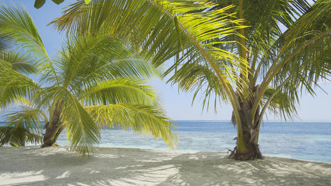Palm Trees Swaying in a Gentle Breeze in the Maldives Footage