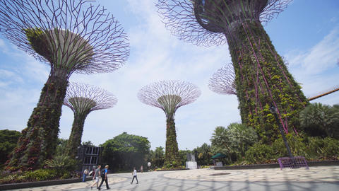 Gardens by the Bay's supertrees; self-sustaining vertical gardens Footage