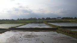 Waterlogged Indonesian Farmland Footage