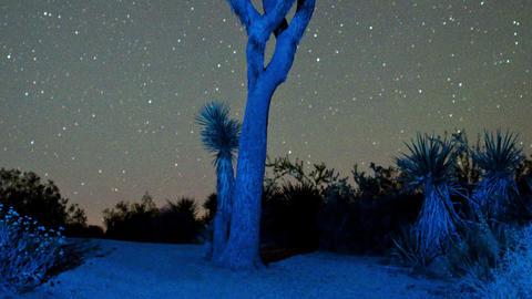 Timelapse stars spinning over joshua tree Live Action