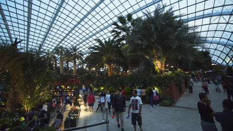 Visitors viewing tropical plants inside Flower Dome at Gardens by the Bay Footage