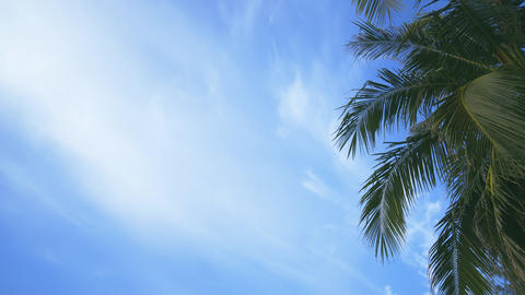 Tropical Palms against Partly Cloudy Sky. UHD 4k video Footage
