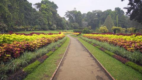 Beautiful area of Royal Botanic Gardens. Peradeniya. Sri Lanka Footage