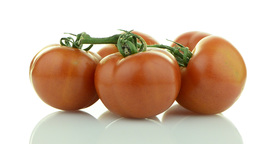 Closeup of tomatoes on the vine Stock Video Footage