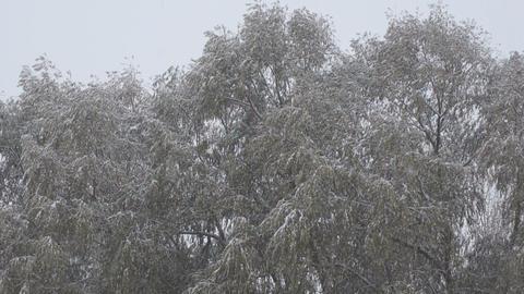 Snowfall 02 Stock Video Footage