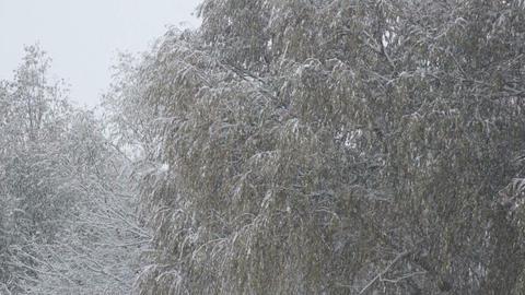 Snowfall 01 Stock Video Footage