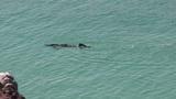 Snorkeler in Turquoise Ocean Water Footage
