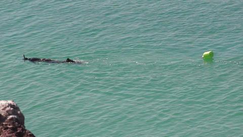 Snorkeler in Turquoise Ocean Water Stock Video Footage